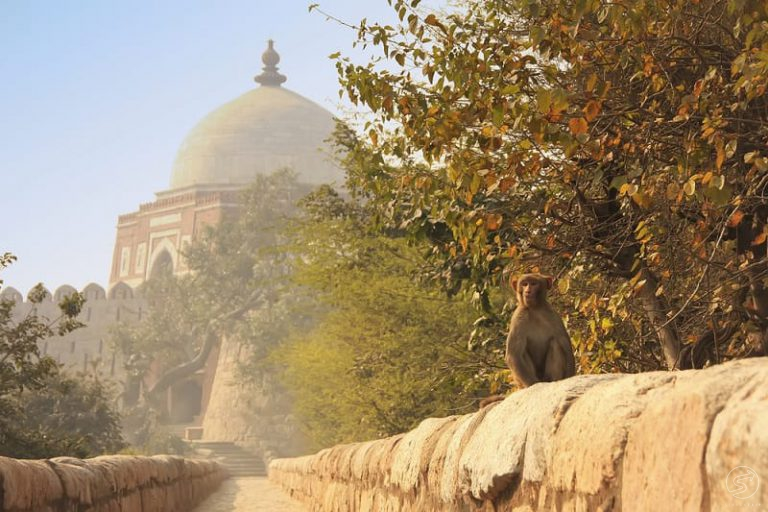 heritage walking tour in new delhi