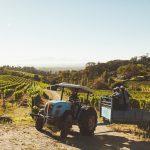 excursion dans les vignobles amman