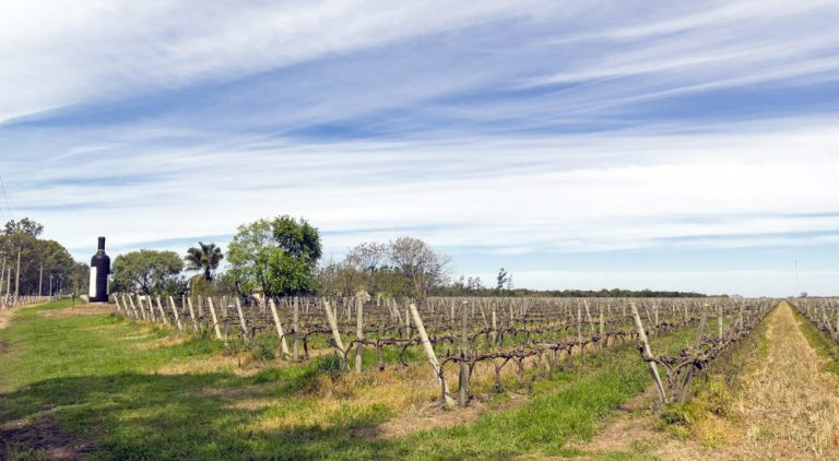 montevideo guided wine-tasting tour montevideo