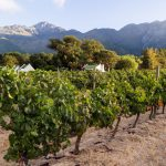 excursion aux vignobles de le cap