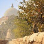 heritage walking tour in new delhi