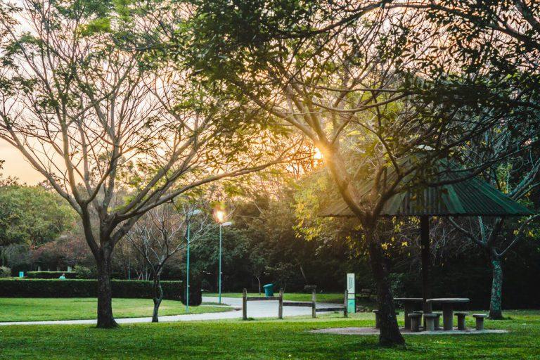 parque trianon   sao paulo